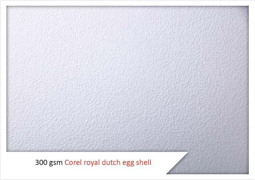 300 Gsm Corel Royal Dutch Egg Shell